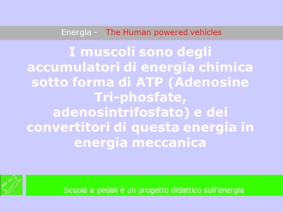 Energia - The Human powered vehicles I muscoli sono degli accumulatori di energia chimica sotto forma di ATP (Adenosine Tri-phosfate, adenosintrifosfa