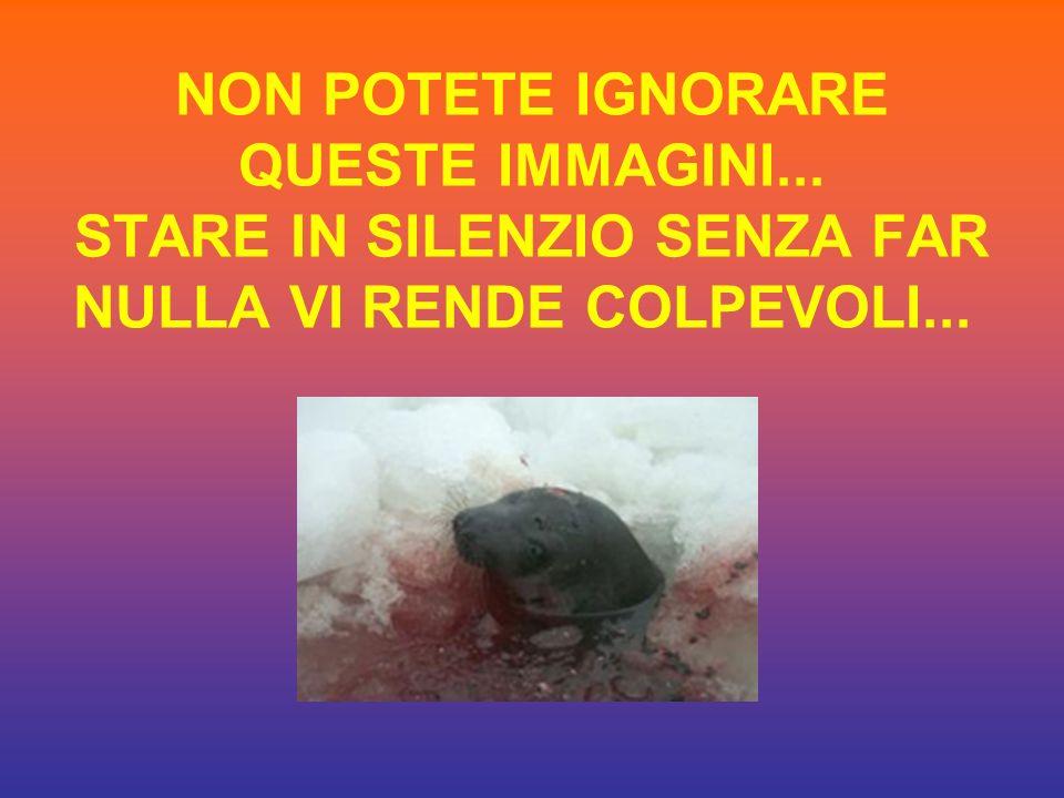 NON POTETE IGNORARE QUESTE IMMAGINI... STARE IN SILENZIO SENZA FAR NULLA VI RENDE COLPEVOLI...