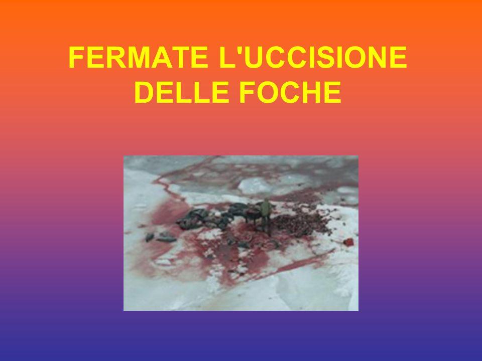 FERMATE L UCCISIONE DELLE FOCHE