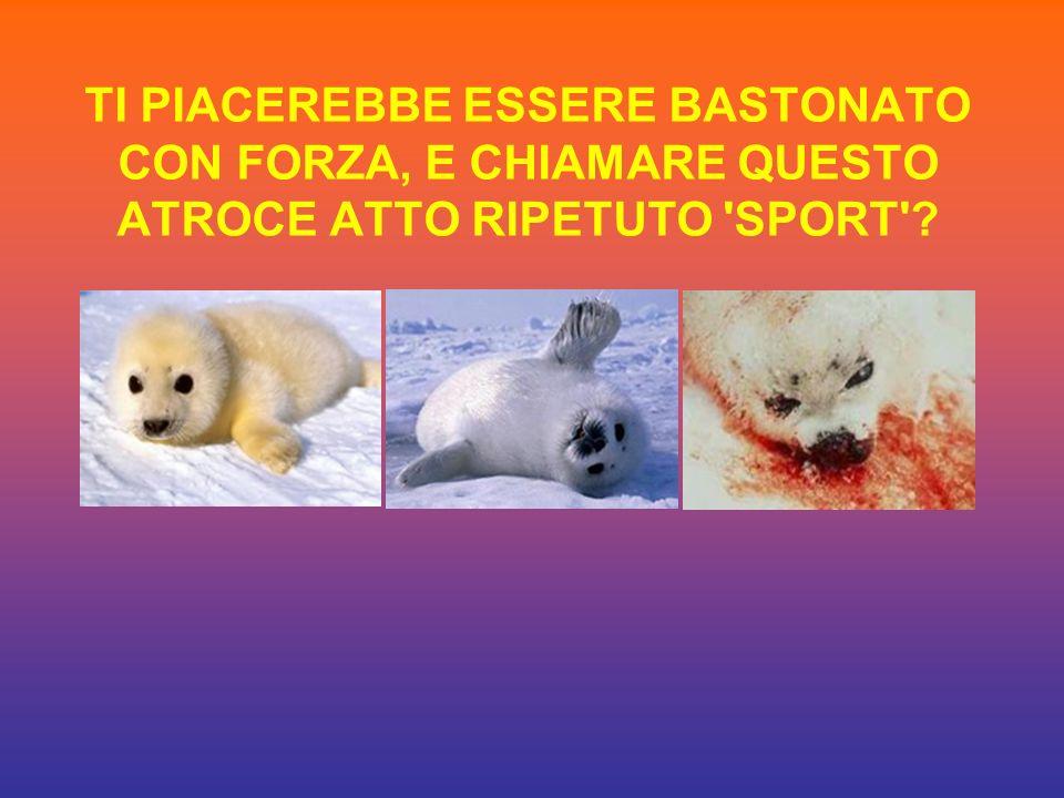 TI PIACEREBBE ESSERE BASTONATO CON FORZA, E CHIAMARE QUESTO ATROCE ATTO RIPETUTO SPORT