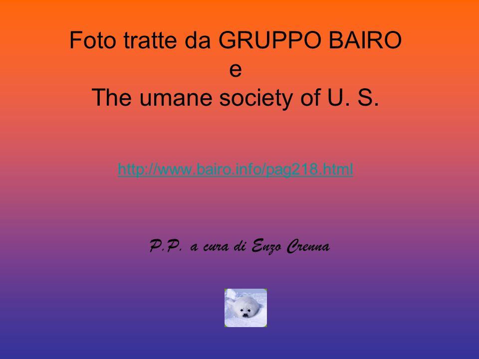 Foto tratte da GRUPPO BAIRO e The umane society of U. S. http://www.bairo.info/pag218.html http://www.bairo.info/pag218.html P.P. a cura di Enzo Crenn