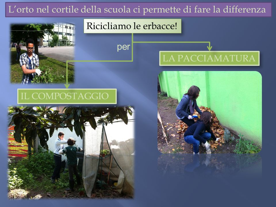 Lorto nel cortile della scuola ci permette di fare la differenza IL COMPOSTAGGIO Ricicliamo le erbacce! LA PACCIAMATURA per