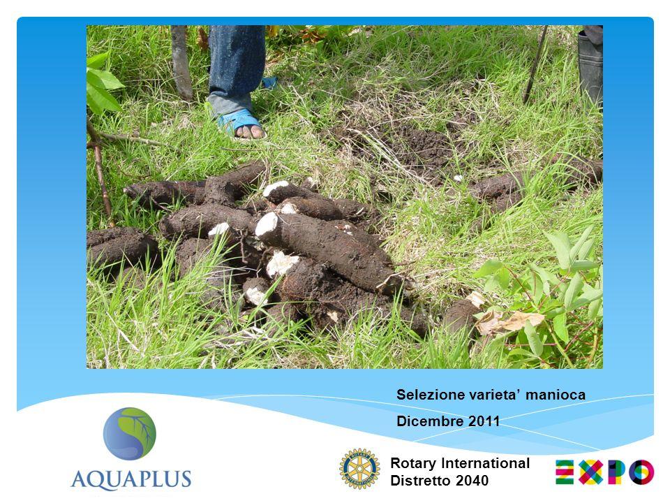 Rotary International Distretto 2040 Selezione varieta manioca Dicembre 2011