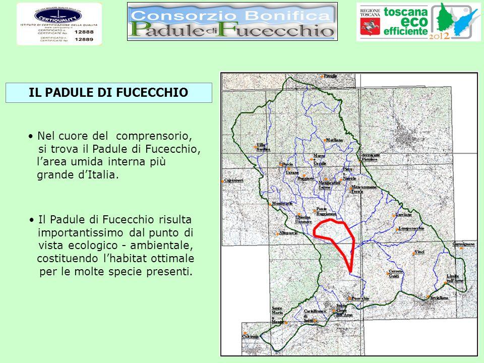 VALENZA STORICA PADULE DI FUCECCHIO (2931 ha) VALENZA IDRAULICA Spartiacque tra la Valdinievole ed il Valdarno Cassa di espansione per i corsi dacqua della Valdinievole Fucecchio Ponte Buggianese Lamporecchio Empoli Monsummano Terme Santa Croce s/A Depressione generata dai movimenti di faglia nel Miocene (5 milioni di anni fa) Depositi dei sedimenti dellArno allinizio del Quaternario (2,5 milioni di anni fa) Erosione da parte dei corsi dacqua della Valdinievole (fino a 2000 anni fa) Livellamento dello sbocco e sedimentazione di colmata (da 2000 anni fa ad oggi) INTERRAMENTO: circa 1 m ogni secolo Castelfranco di Sotto IL PADULE ED IL CANALE USCIANA