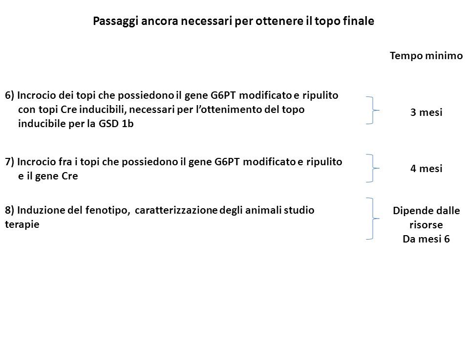 Passaggi ancora necessari per ottenere il topo finale 6) Incrocio dei topi che possiedono il gene G6PT modificato e ripulito con topi Cre inducibili,