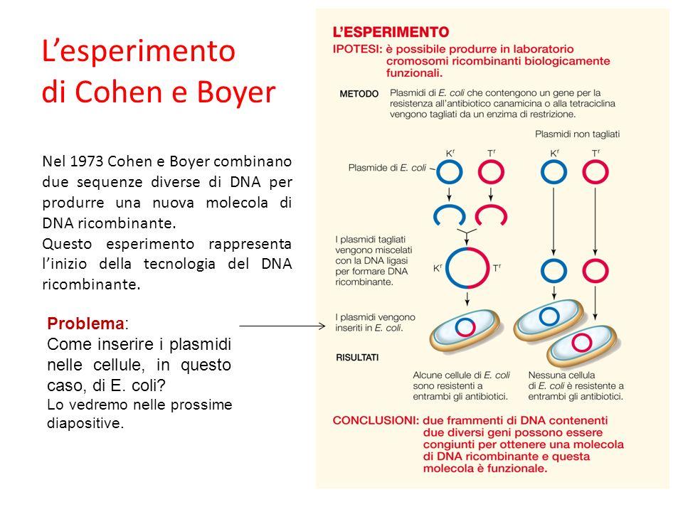 Nel 1973 Cohen e Boyer combinano due sequenze diverse di DNA per produrre una nuova molecola di DNA ricombinante. Questo esperimento rappresenta liniz