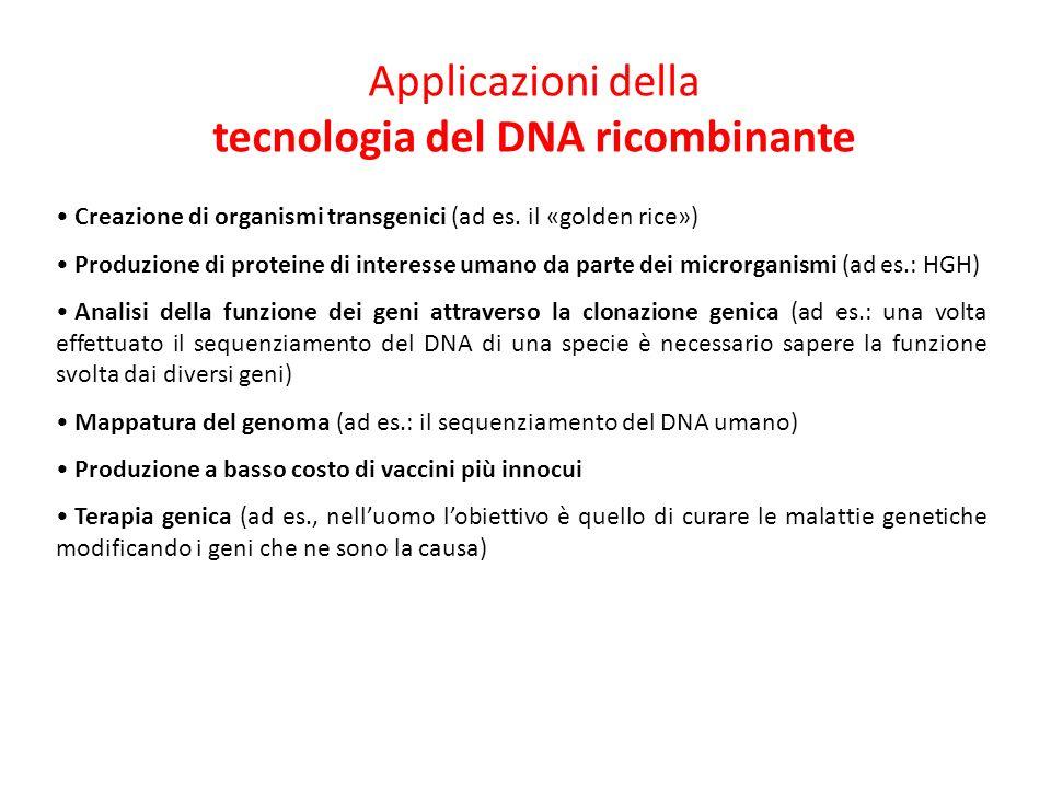 Applicazioni della tecnologia del DNA ricombinante Creazione di organismi transgenici (ad es.