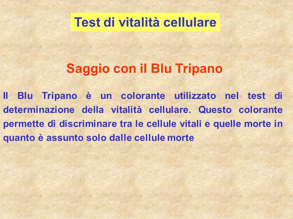 Test di vitalità cellulare Saggio con il Blu Tripano Il Blu Tripano è un colorante utilizzato nel test di determinazione della vitalità cellulare. Que