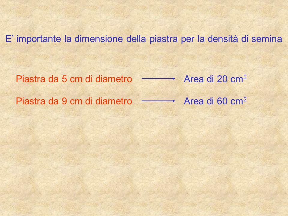 E importante la dimensione della piastra per la densità di semina Piastra da 5 cm di diametroArea di 20 cm 2 Piastra da 9 cm di diametroArea di 60 cm