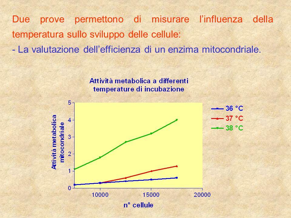 Due prove permettono di misurare linfluenza della temperatura sullo sviluppo delle cellule: - La valutazione dellefficienza di un enzima mitocondriale