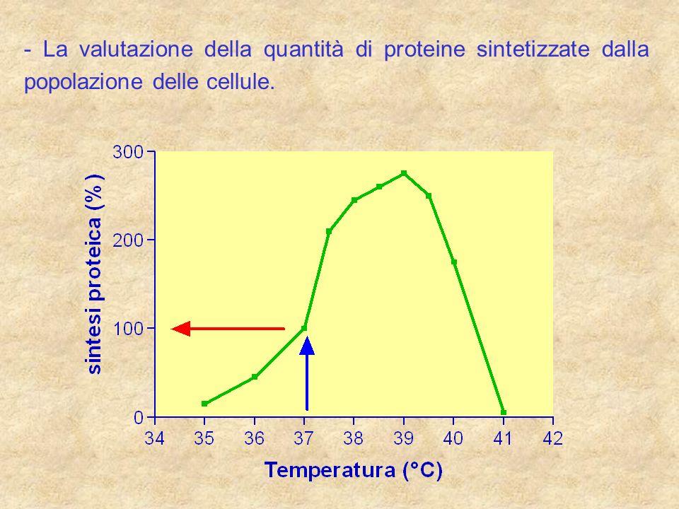 - La valutazione della quantità di proteine sintetizzate dalla popolazione delle cellule.