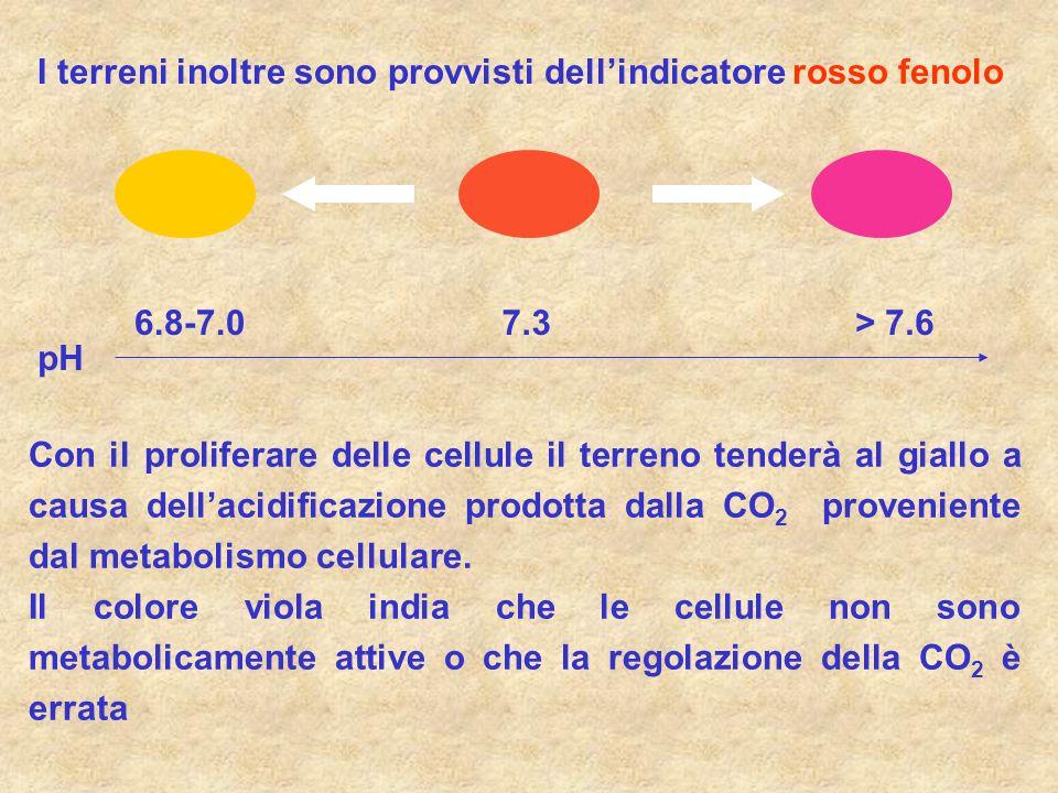 I terreni inoltre sono provvisti dellindicatore rosso fenolo 7.36.8-7.0> 7.6 pH Con il proliferare delle cellule il terreno tenderà al giallo a causa