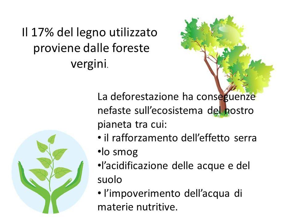 Il 17% del legno utilizzato proviene dalle foreste vergini. La deforestazione ha conseguenze nefaste sullecosistema del nostro pianeta tra cui: il raf