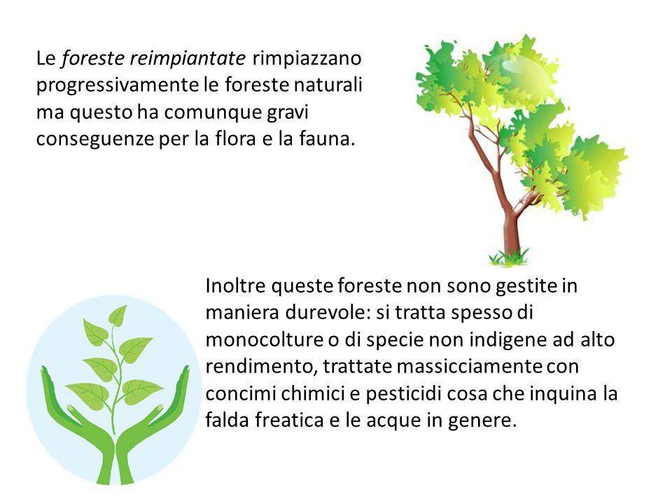 Le foreste reimpiantate rimpiazzano progressivamente le foreste naturali ma questo ha comunque gravi conseguenze per la flora e la fauna. Inoltre ques