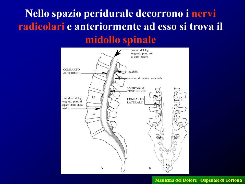 2 Medicina del Dolore - Ospedale di Tortona Nello spazio peridurale decorrono i nervi radicolari e anteriormente ad esso si trova il midollo spinale
