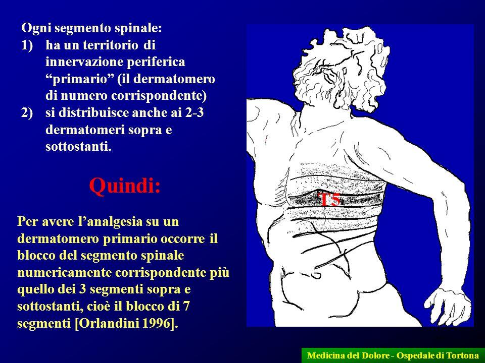 25 Ogni segmento spinale: 1)ha un territorio di innervazione periferica primario (il dermatomero di numero corrispondente) 2)si distribuisce anche ai