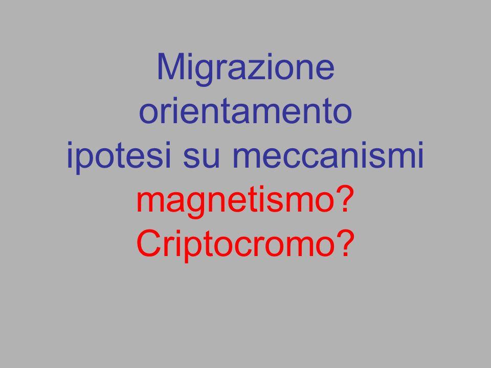 Migrazione orientamento ipotesi su meccanismi magnetismo? Criptocromo?