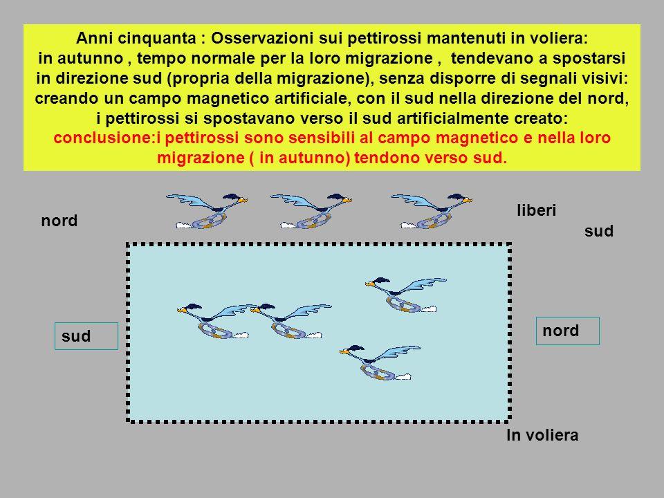 Anni cinquanta : Osservazioni sui pettirossi mantenuti in voliera: in autunno, tempo normale per la loro migrazione, tendevano a spostarsi in direzion
