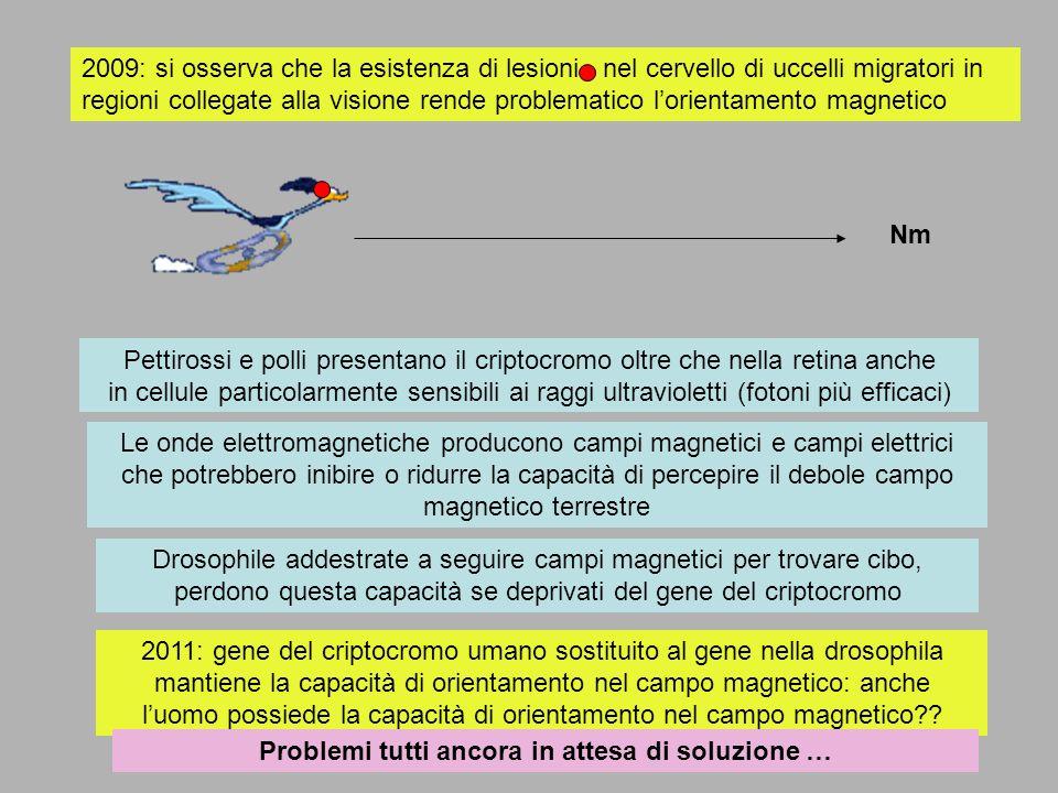 2009: si osserva che la esistenza di lesioni nel cervello di uccelli migratori in regioni collegate alla visione rende problematico lorientamento magn