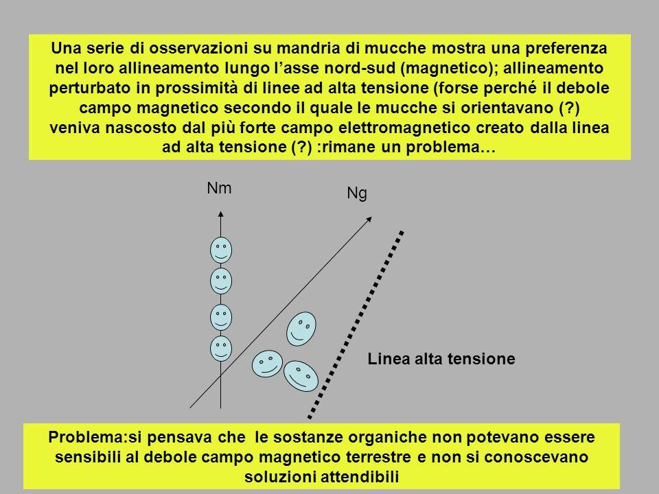 Una serie di osservazioni su mandria di mucche mostra una preferenza nel loro allineamento lungo lasse nord-sud (magnetico); allineamento perturbato i
