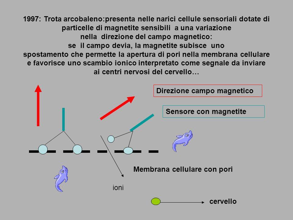 1997: Trota arcobaleno:presenta nelle narici cellule sensoriali dotate di particelle di magnetite sensibili a una variazione nella direzione del campo