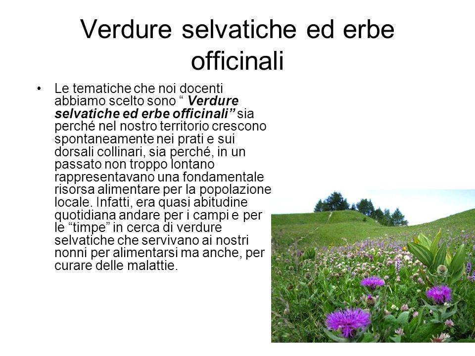Verdure selvatiche ed erbe officinali Le tematiche che noi docenti abbiamo scelto sono Verdure selvatiche ed erbe officinali sia perché nel nostro ter