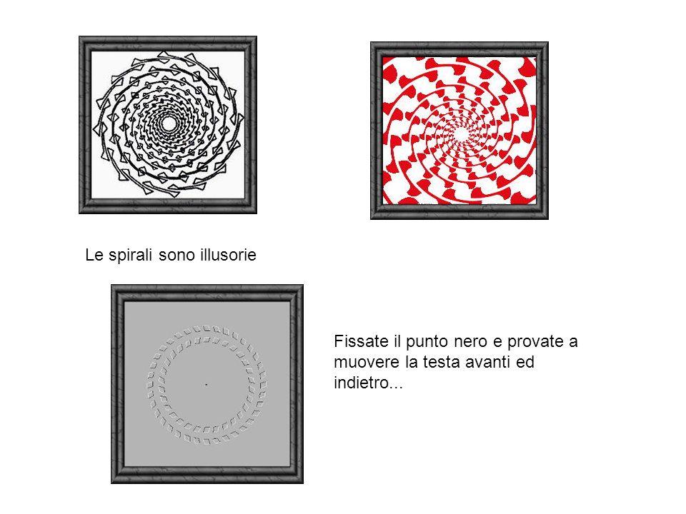 Le spirali sono illusorie Fissate il punto nero e provate a muovere la testa avanti ed indietro...