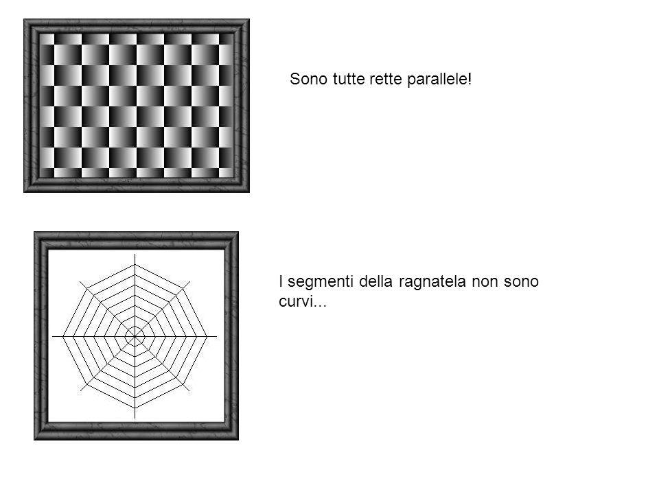 Sono tutte rette parallele! I segmenti della ragnatela non sono curvi...