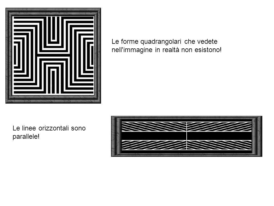 Le forme quadrangolari che vedete nell'immagine in realtà non esistono! Le linee orizzontali sono parallele!
