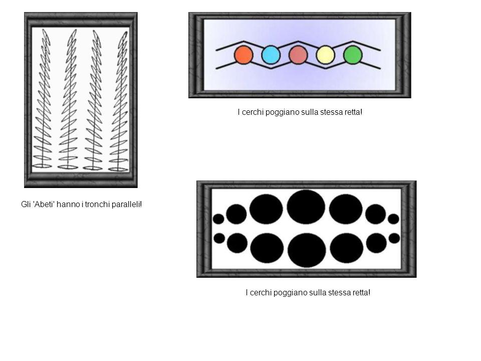 Gli Abeti hanno i tronchi paralleli! I cerchi poggiano sulla stessa retta!
