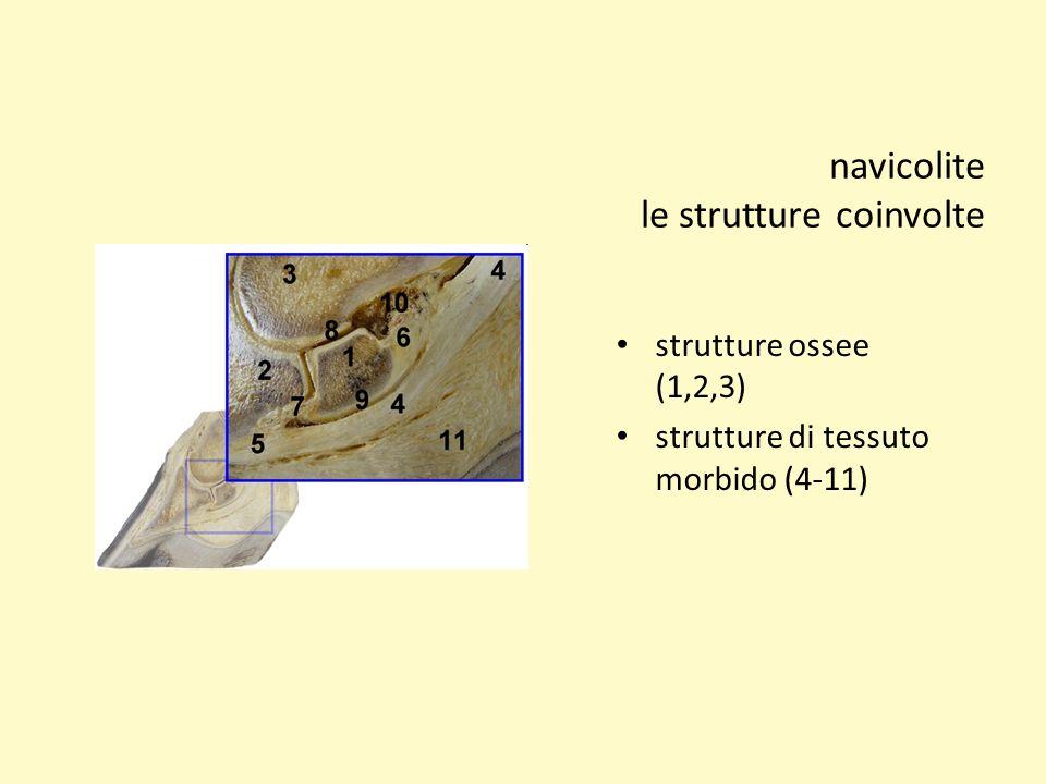 navicolite le strutture coinvolte strutture ossee (1,2,3) strutture di tessuto morbido (4-11)