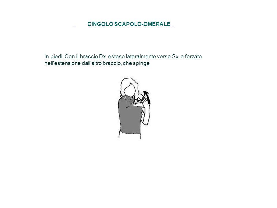 CINGOLO SCAPOLO-OMERALE In piedi. Con il braccio Dx. esteso lateralmente verso Sx. e forzato nell'estensione dall'altro braccio, che spinge