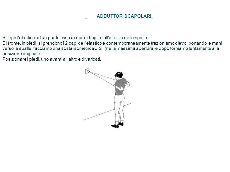 ADDUTTORI SCAPOLARI Si lega l'elastico ad un punto fisso (a mo' di briglie) all'altezza delle spalle. Di fronte, in piedi, si prendono i 2 capi dell'e