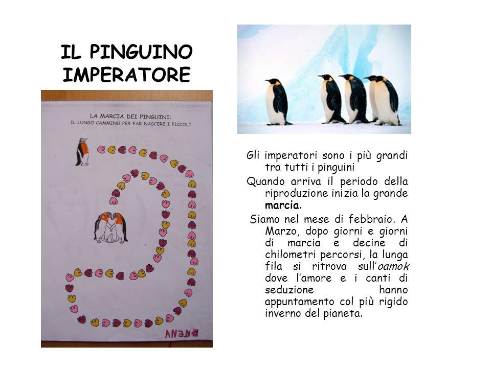 IL PINGUINO IMPERATORE Gli imperatori sono i più grandi tra tutti i pinguini Quando arriva il periodo della riproduzione inizia la grande marcia. Siam