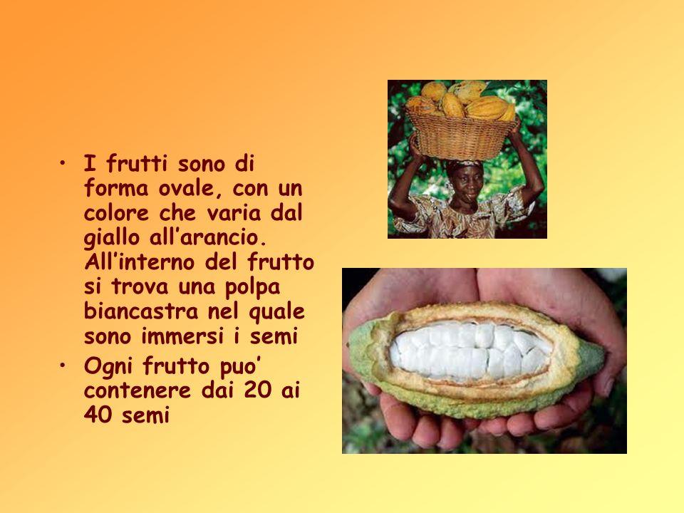 I frutti sono di forma ovale, con un colore che varia dal giallo allarancio. Allinterno del frutto si trova una polpa biancastra nel quale sono immers