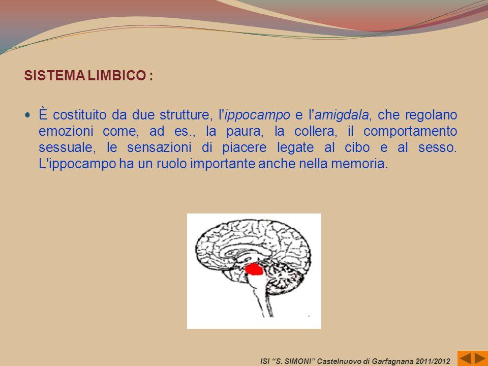 SISTEMA LIMBICO : È costituito da due strutture, l'ippocampo e l'amigdala, che regolano emozioni come, ad es., la paura, la collera, il comportamento