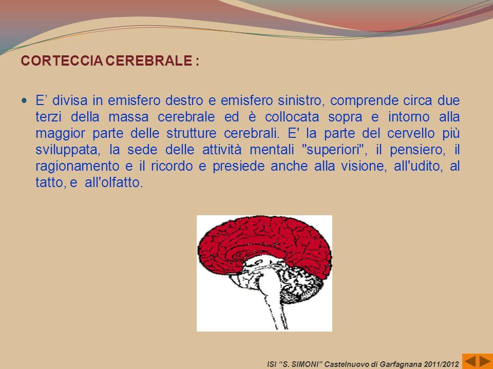 CORTECCIA CEREBRALE : E divisa in emisfero destro e emisfero sinistro, comprende circa due terzi della massa cerebrale ed è collocata sopra e intorno