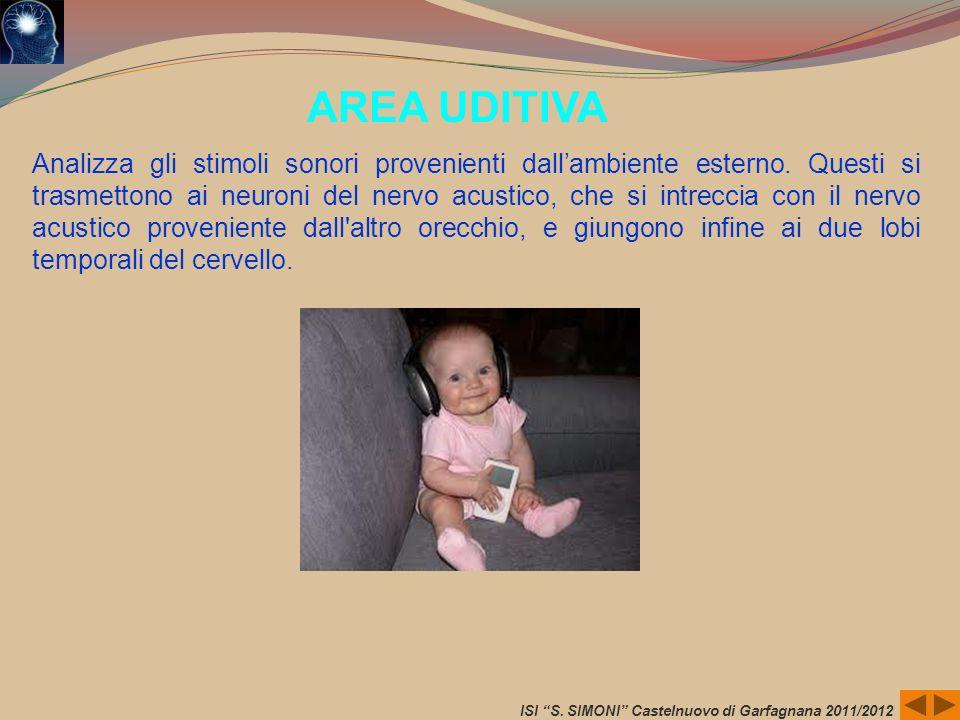 ISI S. SIMONI Castelnuovo di Garfagnana 2011/2012 AREA UDITIVA Analizza gli stimoli sonori provenienti dallambiente esterno. Questi si trasmettono ai