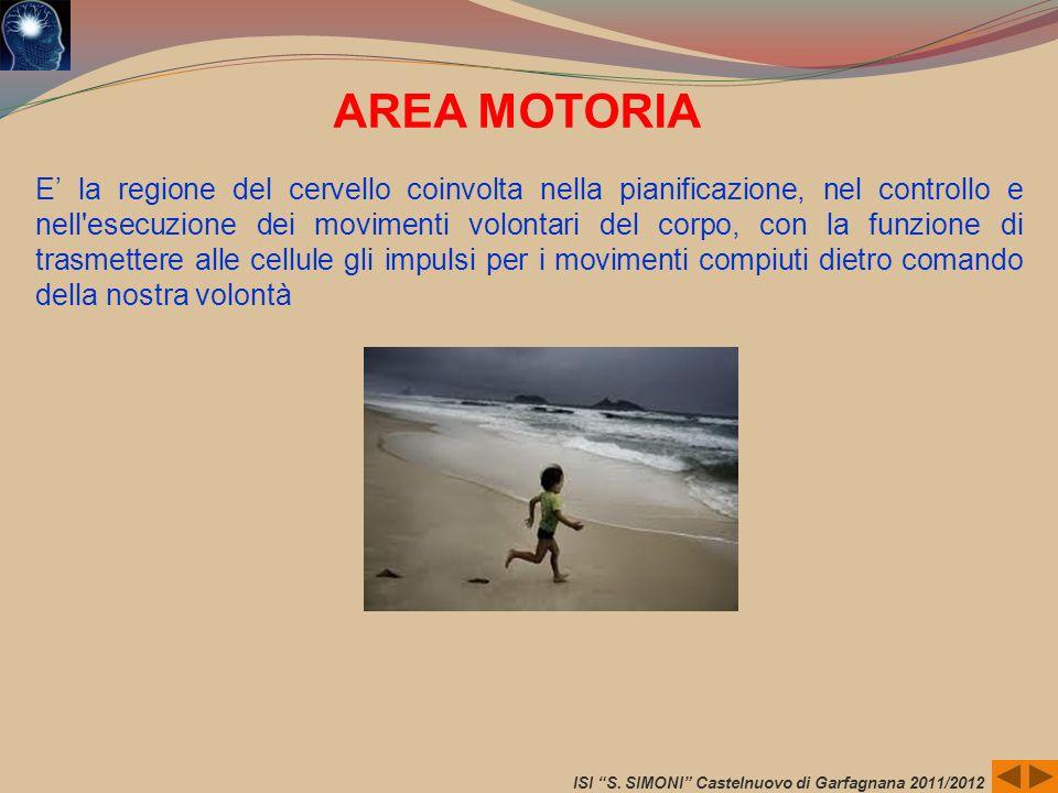 ISI S. SIMONI Castelnuovo di Garfagnana 2011/2012 AREA MOTORIA E la regione del cervello coinvolta nella pianificazione, nel controllo e nell'esecuzio