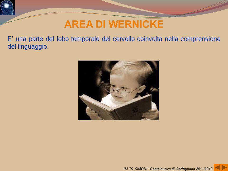 ISI S. SIMONI Castelnuovo di Garfagnana 2011/2012 AREA DI WERNICKE E una parte del lobo temporale del cervello coinvolta nella comprensione del lingua
