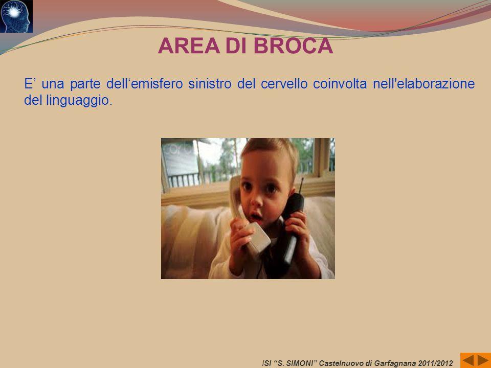 ISI S. SIMONI Castelnuovo di Garfagnana 2011/2012 AREA DI BROCA E una parte dellemisfero sinistro del cervello coinvolta nell'elaborazione del linguag