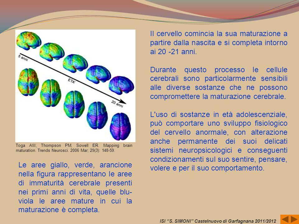 Toga AW, Thompson PM, Sowell ER. Mapping brain maturation. Trends Neurosci. 2006 Mar; 29(3): 148-59. Il cervello comincia la sua maturazione a partire