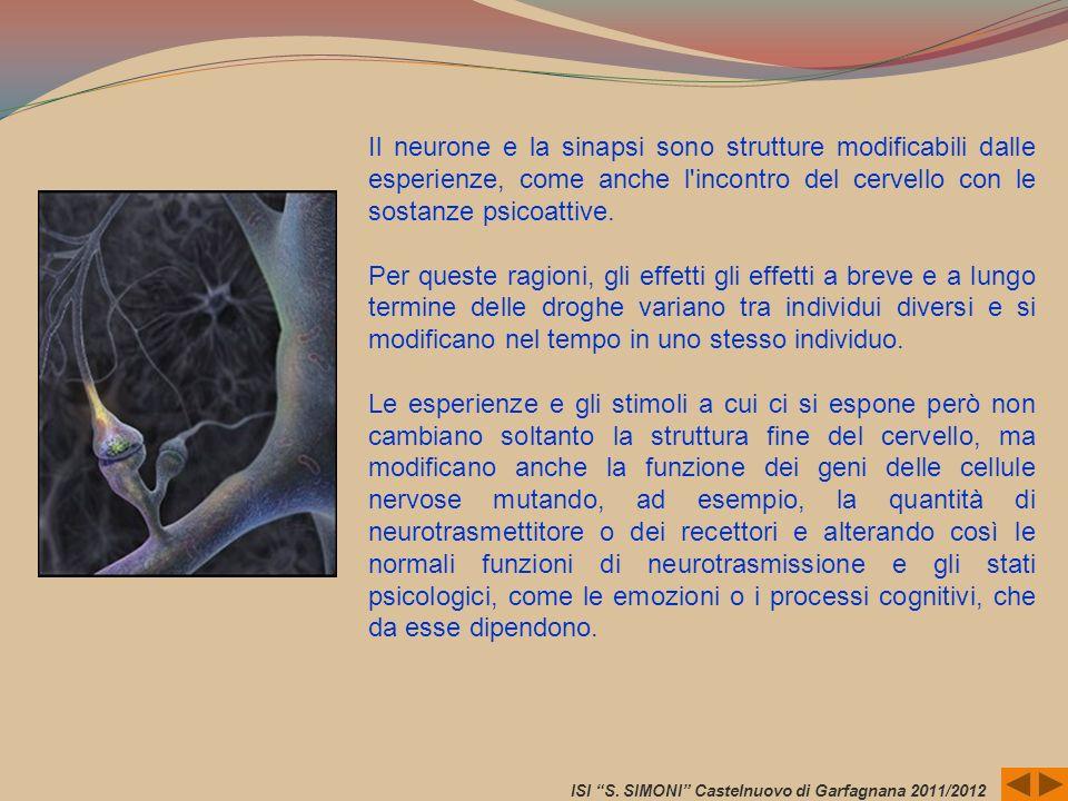 Il neurone e la sinapsi sono strutture modificabili dalle esperienze, come anche l'incontro del cervello con le sostanze psicoattive. Per queste ragio