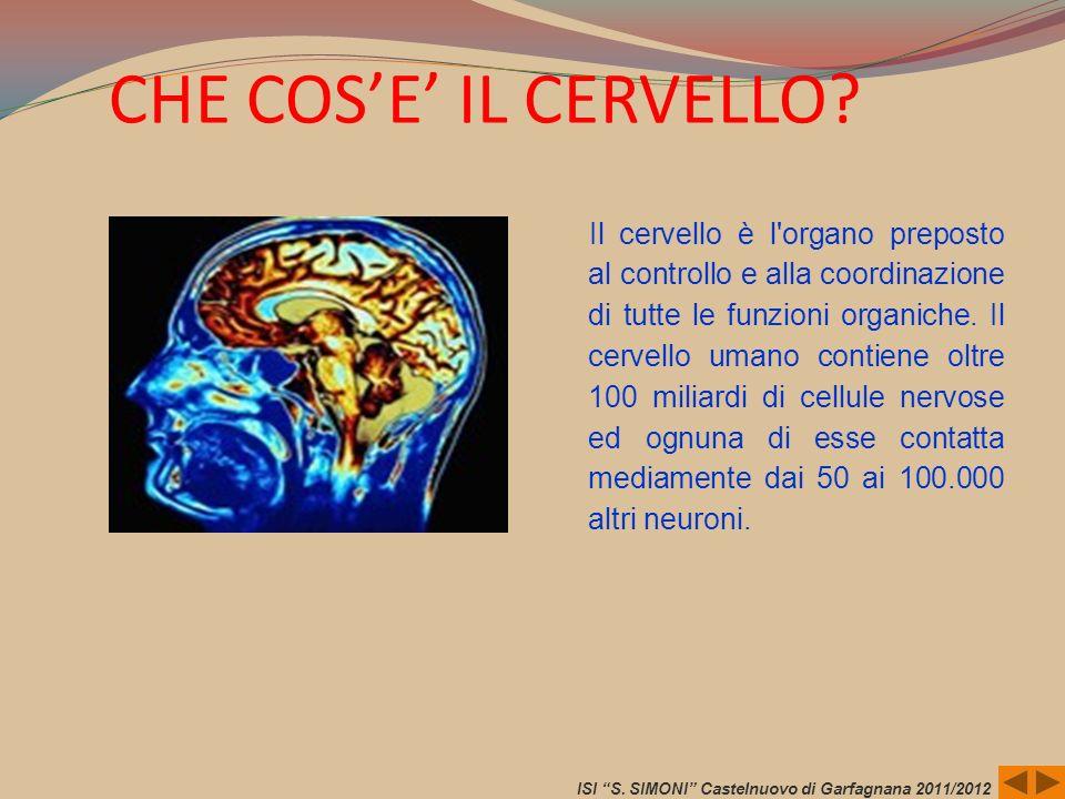 CHE COSE IL CERVELLO? Il cervello è l'organo preposto al controllo e alla coordinazione di tutte le funzioni organiche. Il cervello umano contiene olt