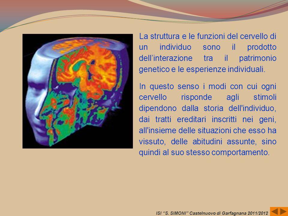 La struttura e le funzioni del cervello di un individuo sono il prodotto dellinterazione tra il patrimonio genetico e le esperienze individuali. In qu