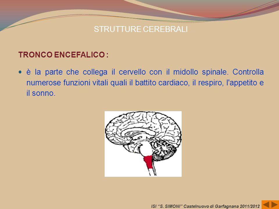 STRUTTURE CEREBRALI TRONCO ENCEFALICO : è la parte che collega il cervello con il midollo spinale. Controlla numerose funzioni vitali quali il battito