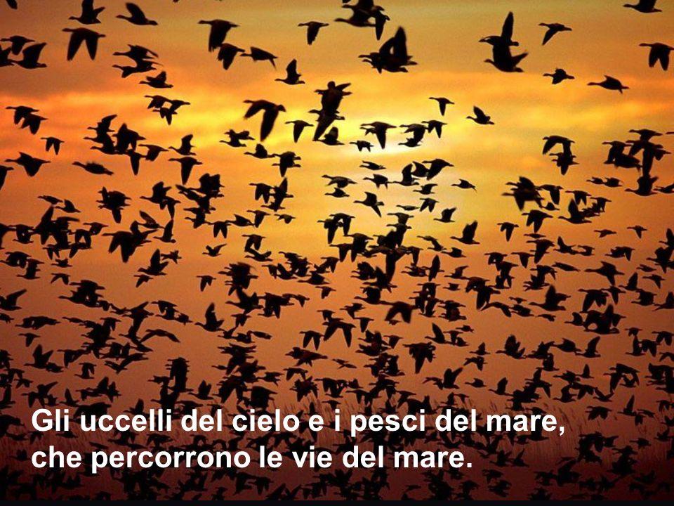 [[ Gli uccelli del cielo e i pesci del mare, che percorrono le vie del mare.
