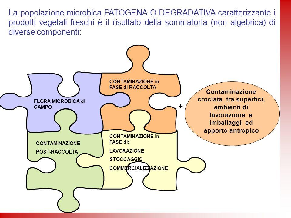 La popolazione microbica PATOGENA O DEGRADATIVA caratterizzante i prodotti vegetali freschi è il risultato della sommatoria (non algebrica) di diverse