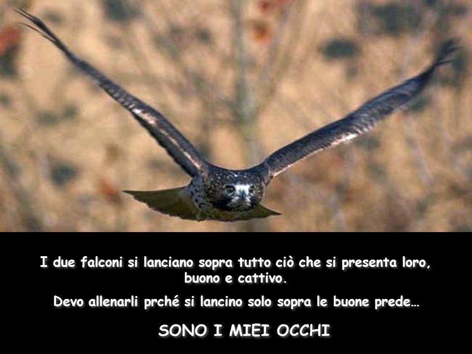 SONO I MIEI OCCHI SONO I MIEI OCCHI I due falconi si lanciano sopra tutto ciò che si presenta loro, buono e cattivo.