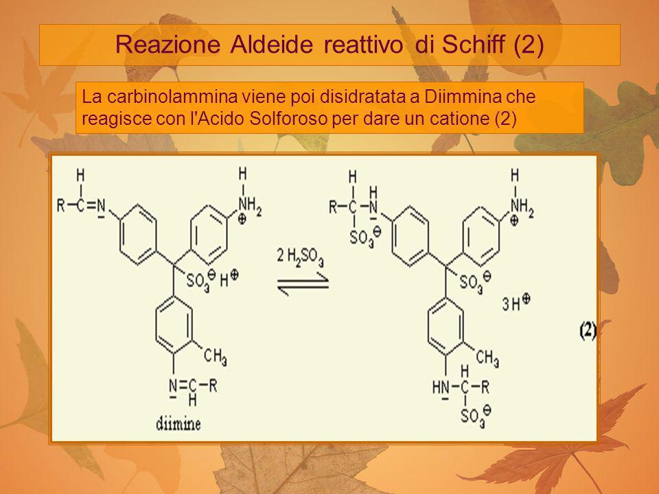 Reazione Aldeide reattivo di Schiff (2) La carbinolammina viene poi disidratata a Diimmina che reagisce con l'Acido Solforoso per dare un catione (2)